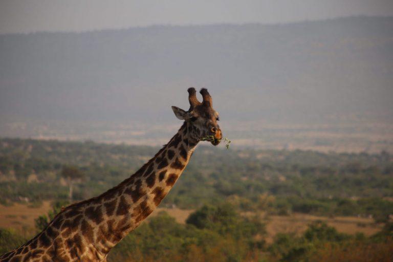 Kenia-Reisebericht-Nadine-Hiden-Have-big-dreams-Reisetipps11