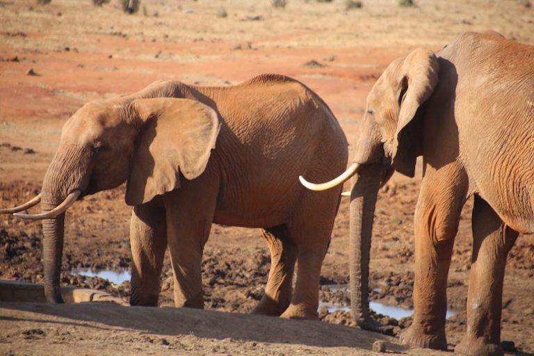 Kenia-Reisebericht-Nadine-Hiden-Have-big-dreams-Reisetipps12