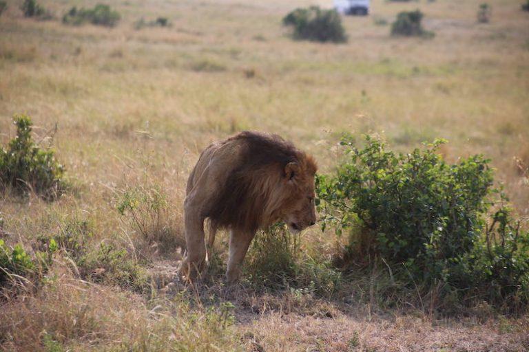 Kenia-Reisebericht-Nadine-Hiden-Have-big-dreams-Reisetipps13