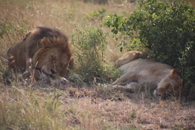 Kenia-Reisebericht-Nadine-Hiden-Have-big-dreams-Reisetipps17