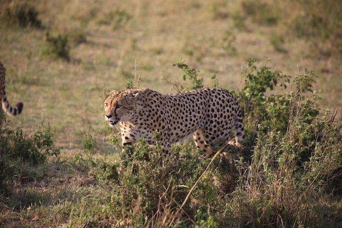 Kenia-Reisebericht-Nadine-Hiden-Have-big-dreams-Reisetipps21