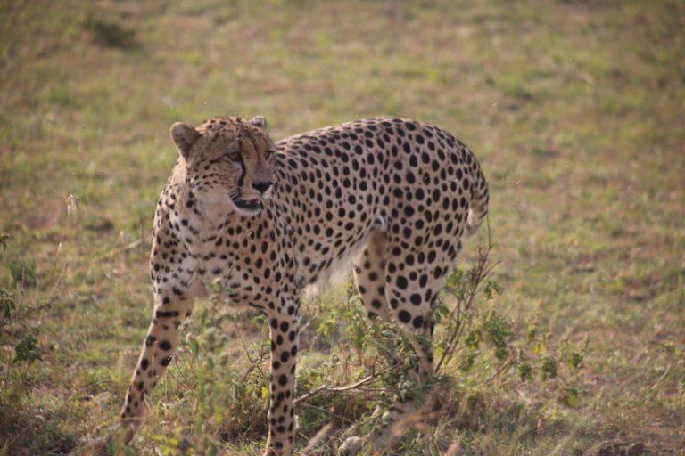 Kenia-Reisebericht-Nadine-Hiden-Have-big-dreams-Reisetipps22