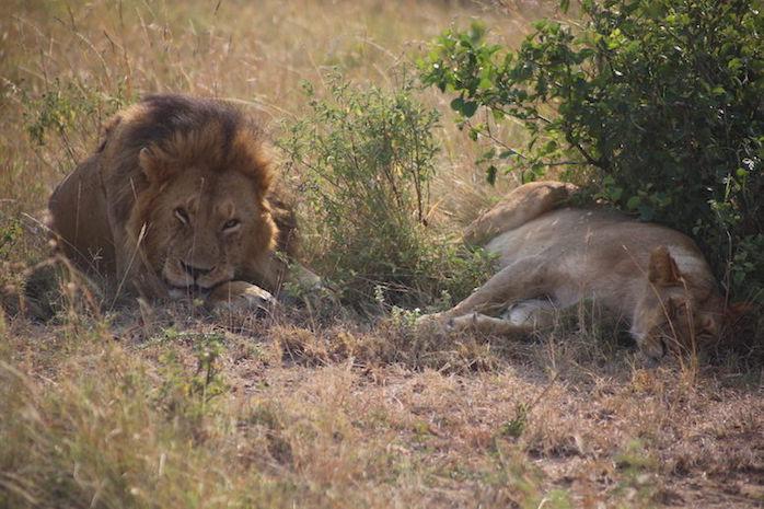 Kenia-Reisebericht-Nadine-Hiden-Have-big-dreams-Reisetipps25