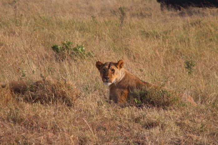 Kenia-Reisebericht-Nadine-Hiden-Have-big-dreams-Reisetipps26