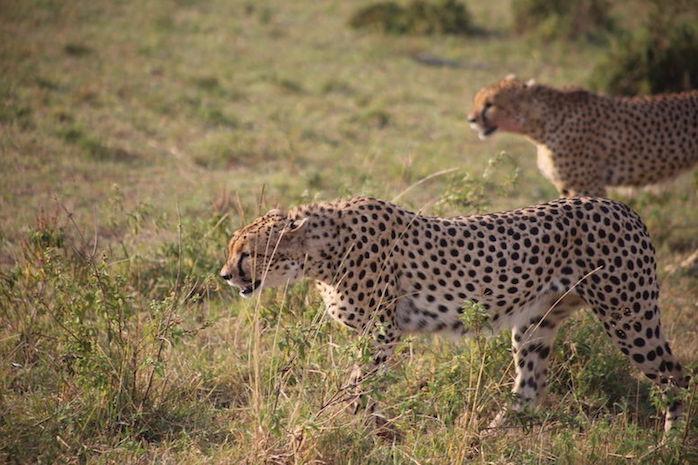 Kenia-Reisebericht-Nadine-Hiden-Have-big-dreams-Reisetipps27