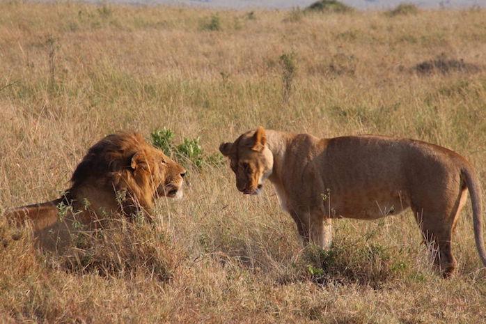 Kenia-Reisebericht-Nadine-Hiden-Have-big-dreams-Reisetipps28