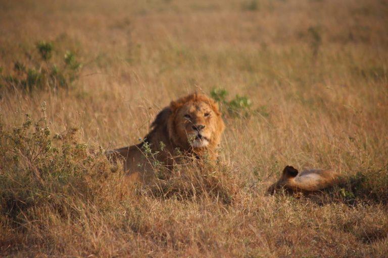 Kenia-Reisebericht-Nadine-Hiden-Have-big-dreams-Reisetipps29