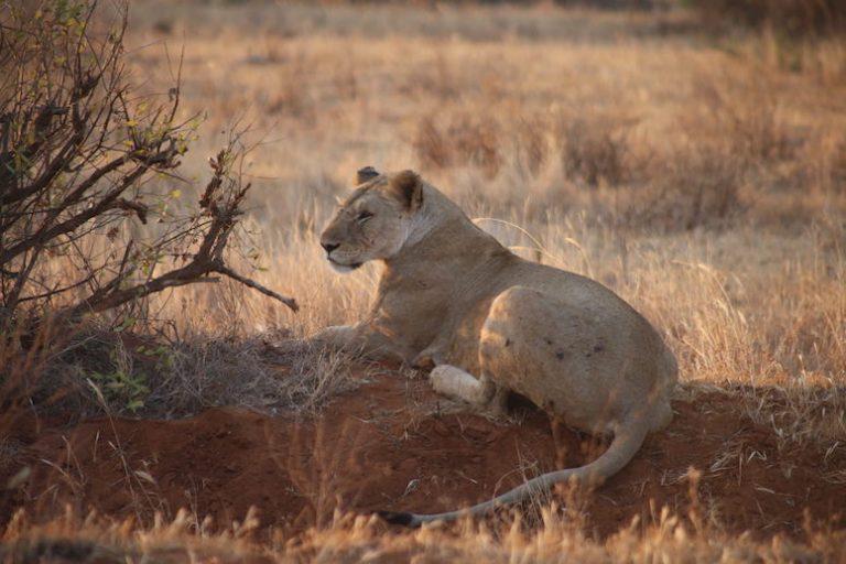 Kenia-Reisebericht-Nadine-Hiden-Have-big-dreams-Reisetipps31