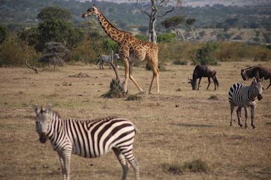 Kenia-Reisebericht-Nadine-Hiden-Have-big-dreams-Reisetipps32