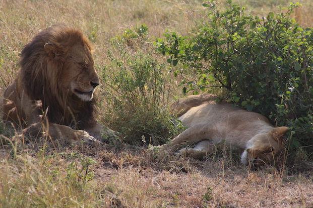 Kenia-Reisebericht-Nadine-Hiden-Have-big-dreams-Reisetipps36