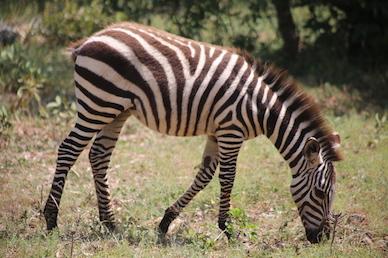 Kenia-Reisebericht-Nadine-Hiden-Have-big-dreams-Reisetipps4