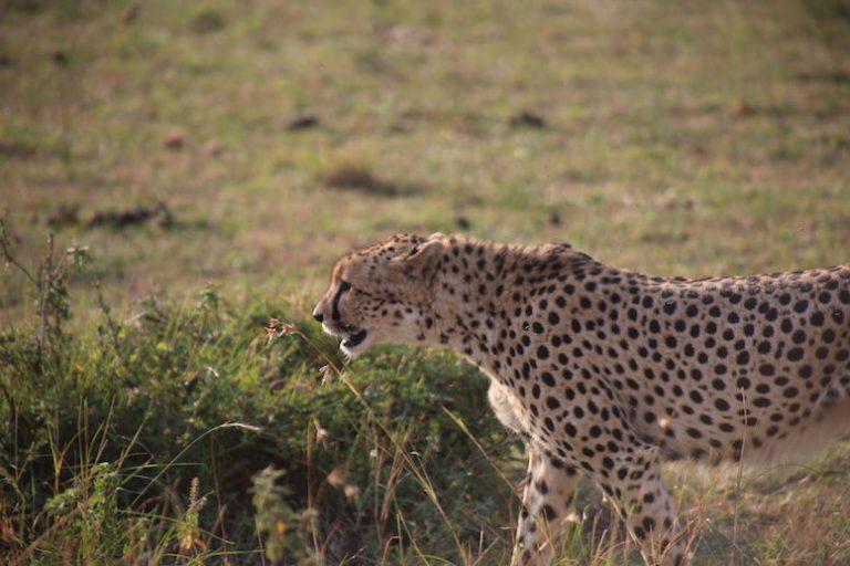 Kenia-Reisebericht-Nadine-Hiden-Have-big-dreams-Reisetipps42