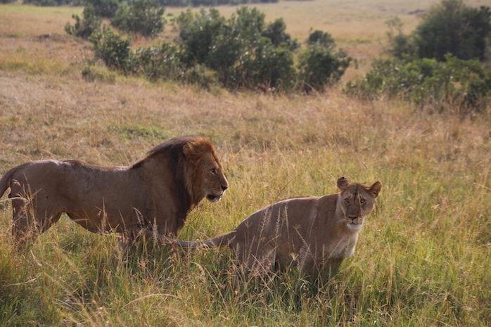 Kenia-Reisebericht-Nadine-Hiden-Have-big-dreams-Reisetipps44