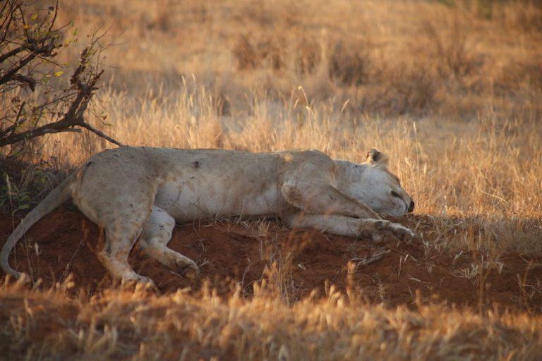 Kenia-Reisebericht-Nadine-Hiden-Have-big-dreams-Reisetipps45