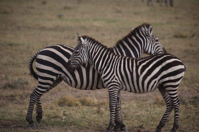 Kenia-Reisebericht-Nadine-Hiden-Have-big-dreams-Reisetipps46