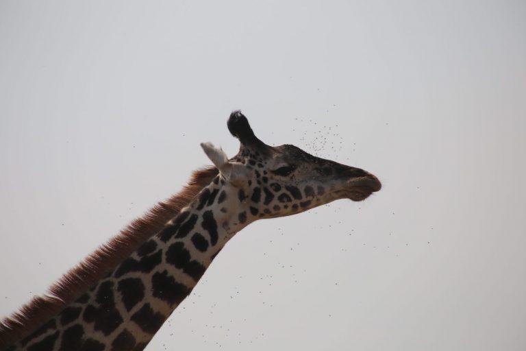 Kenia-Reisebericht-Nadine-Hiden-Have-big-dreams-Reisetipps47