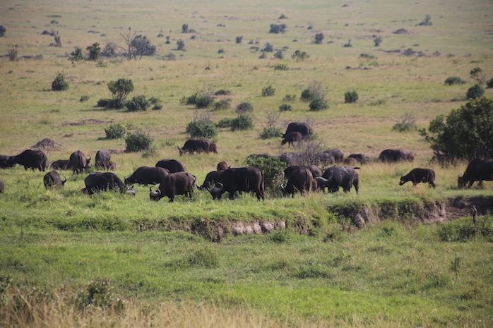 Kenia-Reisebericht-Nadine-Hiden-Have-big-dreams-Reisetipps48