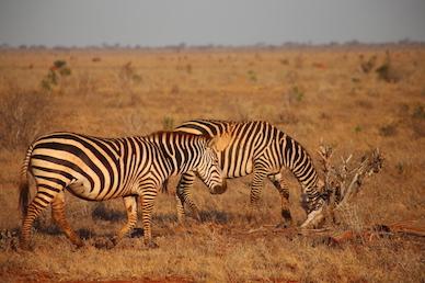 Kenia-Reisebericht-Nadine-Hiden-Have-big-dreams-Reisetipps49