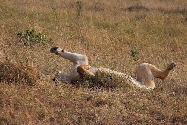 Kenia-Reisebericht-Nadine-Hiden-Have-big-dreams-Reisetipps50