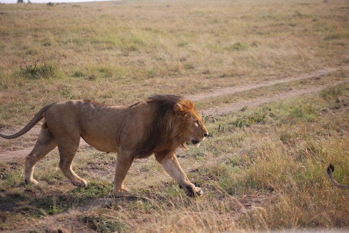 Kenia-Reisebericht-Nadine-Hiden-Have-big-dreams-Reisetipps53