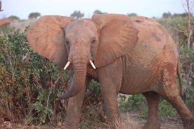 Kenia-Reisebericht-Nadine-Hiden-Have-big-dreams-Reisetipps60