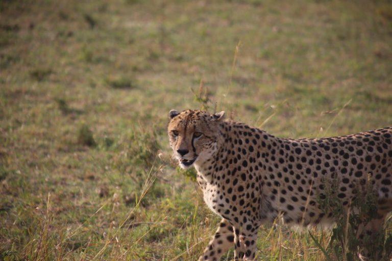 Kenia-Reisebericht-Nadine-Hiden-Have-big-dreams-Reisetipps62