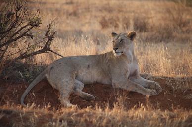 Kenia-Reisebericht-Nadine-Hiden-Have-big-dreams-Reisetipps64