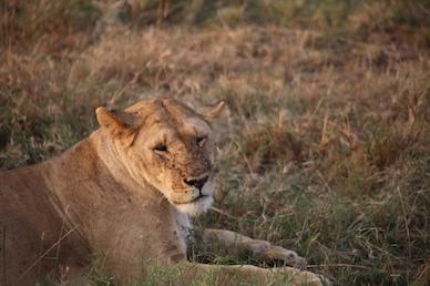 Kenia-Reisebericht-Nadine-Hiden-Have-big-dreams-Reisetipps66
