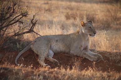 Kenia-Reisebericht-Nadine-Hiden-Have-big-dreams-Reisetipps68