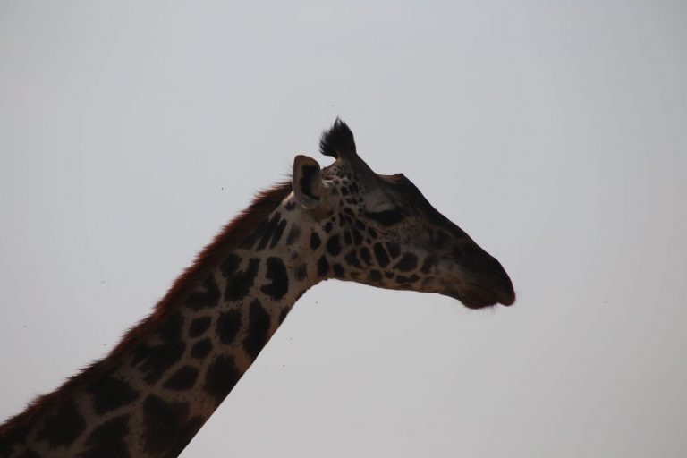Kenia-Reisebericht-Nadine-Hiden-Have-big-dreams-Reisetipps73