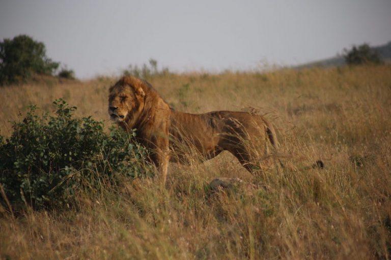 Kenia-Reisebericht-Nadine-Hiden-Have-big-dreams-Reisetipps74