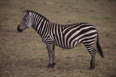 Kenia-Reisebericht-Nadine-Hiden-Have-big-dreams-Reisetipps77
