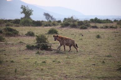 Kenia-Reisebericht-Nadine-Hiden-Have-big-dreams-Reisetipps79