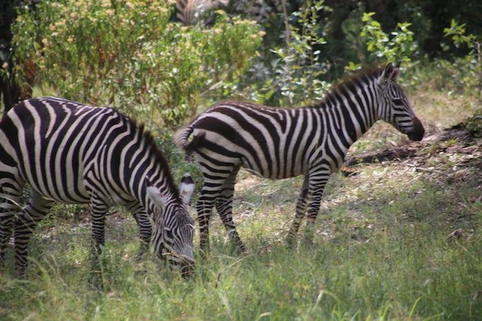 Kenia-Reisebericht-Nadine-Hiden-Have-big-dreams-Reisetipps8