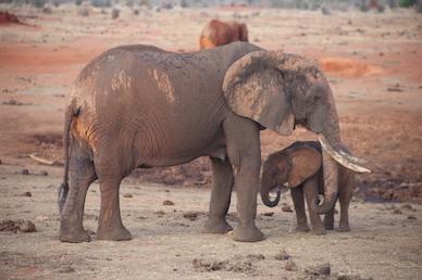 Kenia-Reisebericht-Nadine-Hiden-Have-big-dreams-Reisetipps80