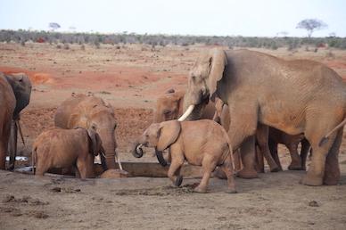 Kenia-Reisebericht-Nadine-Hiden-Have-big-dreams-Reisetipps81