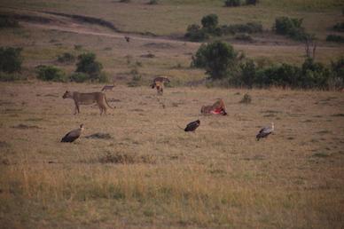 Kenia-Reisebericht-Nadine-Hiden-Have-big-dreams-Reisetipps85