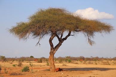 Kenia-Reisebericht-Nadine-Hiden-Have-big-dreams-Reisetipps87