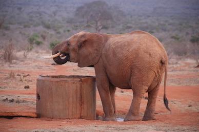 Kenia-Reisebericht-Nadine-Hiden-Have-big-dreams-Reisetipps92