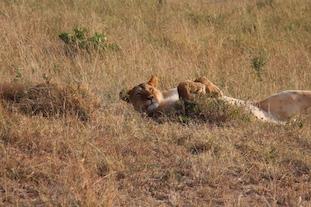 Kenia-Reisebericht-Nadine-Hiden-Have-big-dreams-Reisetipps95
